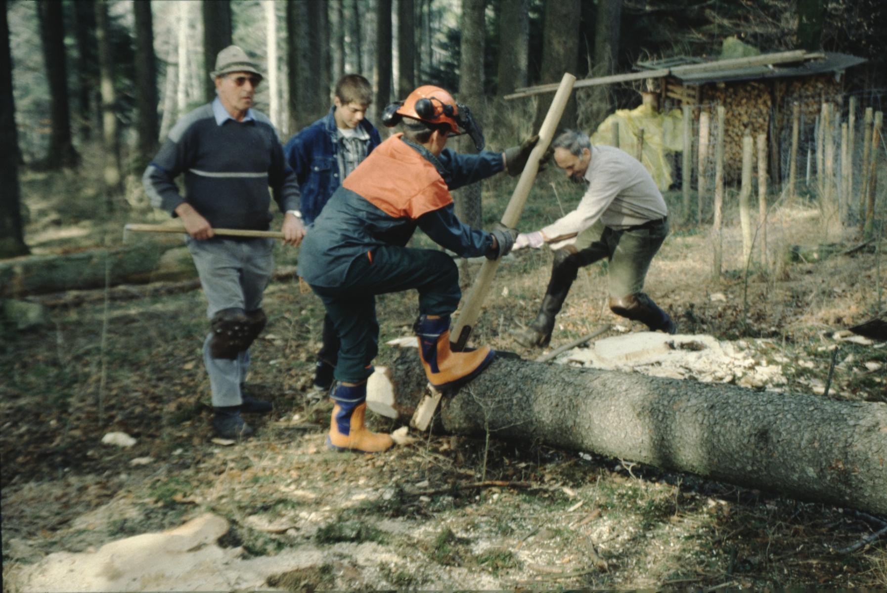 Drehen des Stammes mit dem Kehrhaken - Dölf Fenner. Bäume fällen wie früher.