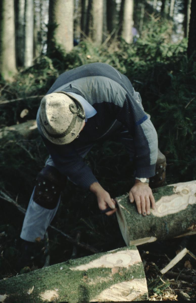 Der Stamm wird bezeichnet - Hans Koller. Bäume fällen wie früher.