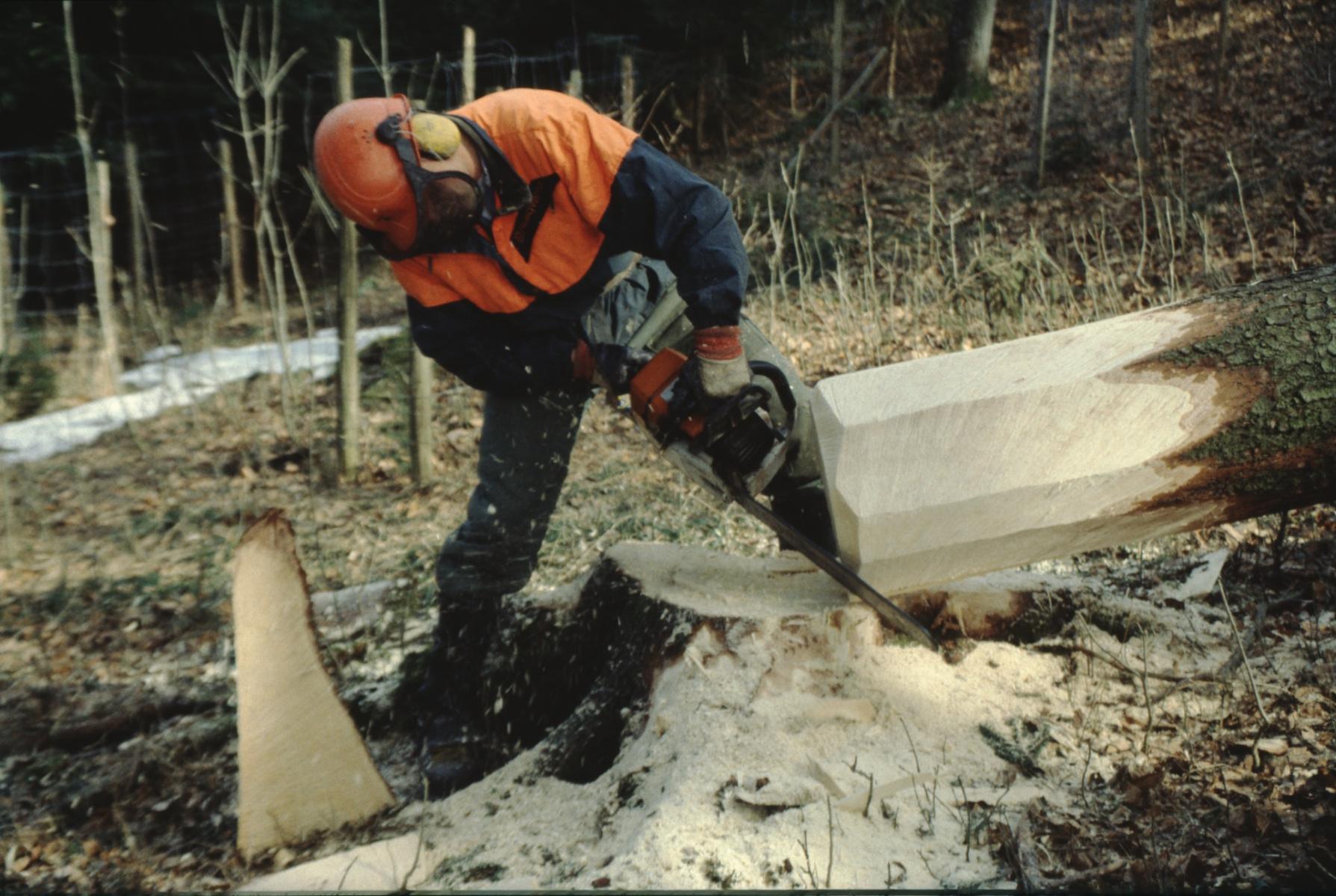 Unmittelbar nach dem Fällen bearbeiten der Schnittstelle. Bäume fällen.