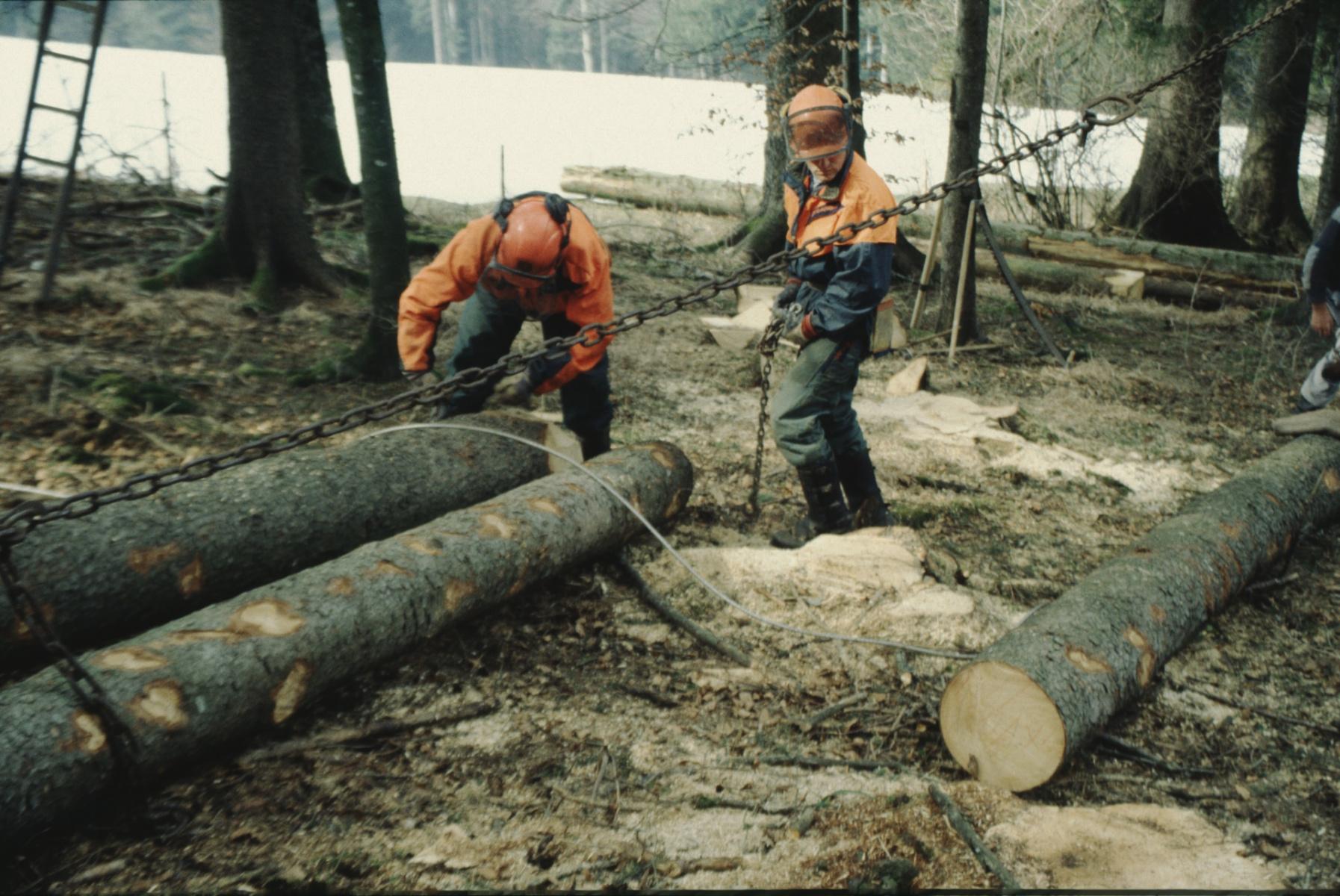 Bäume fällen, Bereitmachen zum Abtransport
