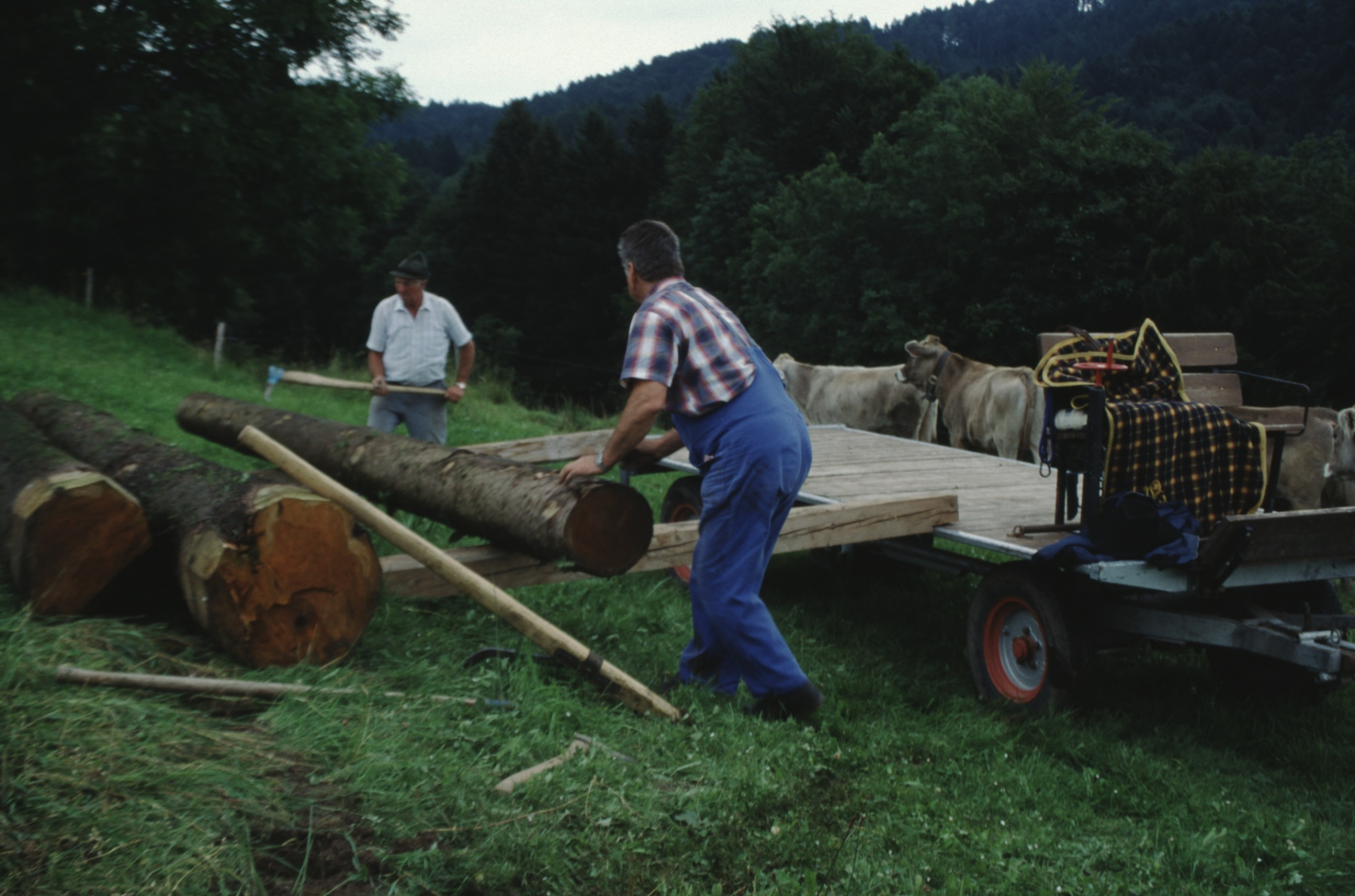 Allenberg, Holz aufladen. Hinten Hans Koller.
