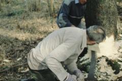 Dölf und Hans beim Sägen. Bäume fällen wie früher.