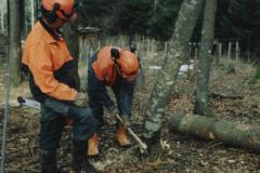 Bäume fällen, Anschrotten