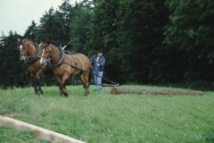Allenberg-Holz schleiken