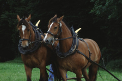 Allenberg, Pferdegespann