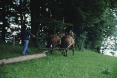 Allenberg, Holz schleiken