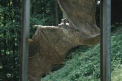 Die Fledermaus beim Rastplatz