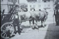 Jakob u. Emil Pfenninger (Lusteren-Emil) mit Stieren u. Leiterwagen in Unterwetzikon