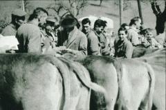 Ernst Graf, Heiri Brandenberger, Viehprämierung