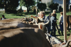 Viehprämierung Walter Amacher