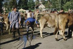 Viehprämierung
