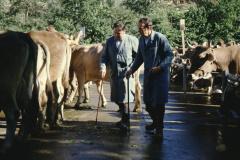 Viehprämierung, Juroren