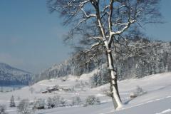 Blick von Steigstr Rtg Skibeizli, Laubenfelsen