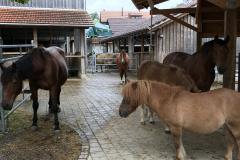 40 Jahre Hof Oberdorf, Tiere