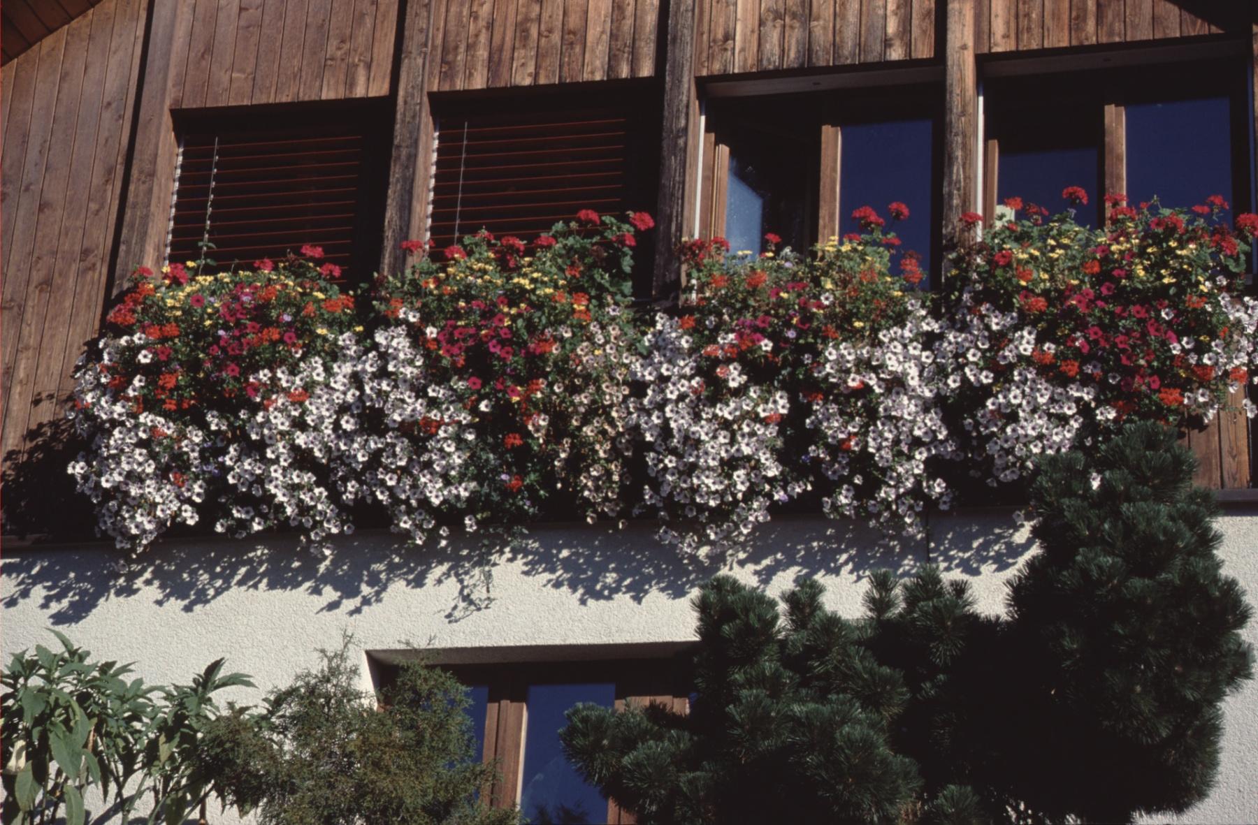 Haus Sturzenegger (Fensterablage gross)