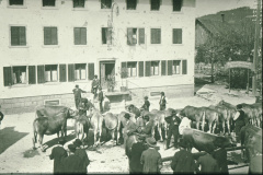 Viehprämierung beim Bären. Auf der Treppe oben Heinrich Stössel, Tierarzt, Besitzer des Bären und ab 1912 Gemeindepräsident.