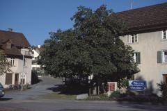 Dorfplatz mit Linde, alte Bettswilerstr