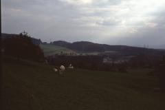Blick von der Weid auf die Kiesgrube