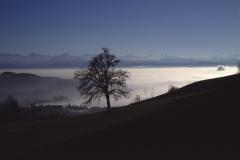 von der Rosinlistr., Blick in die Alpen