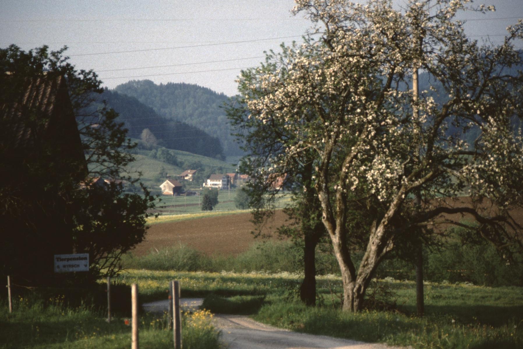 Blick auf Bettswil