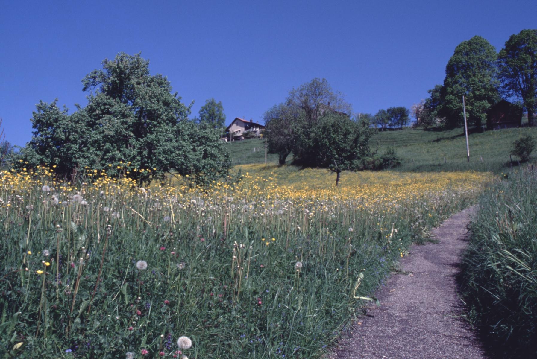 Haldenweglein in volle Blüte