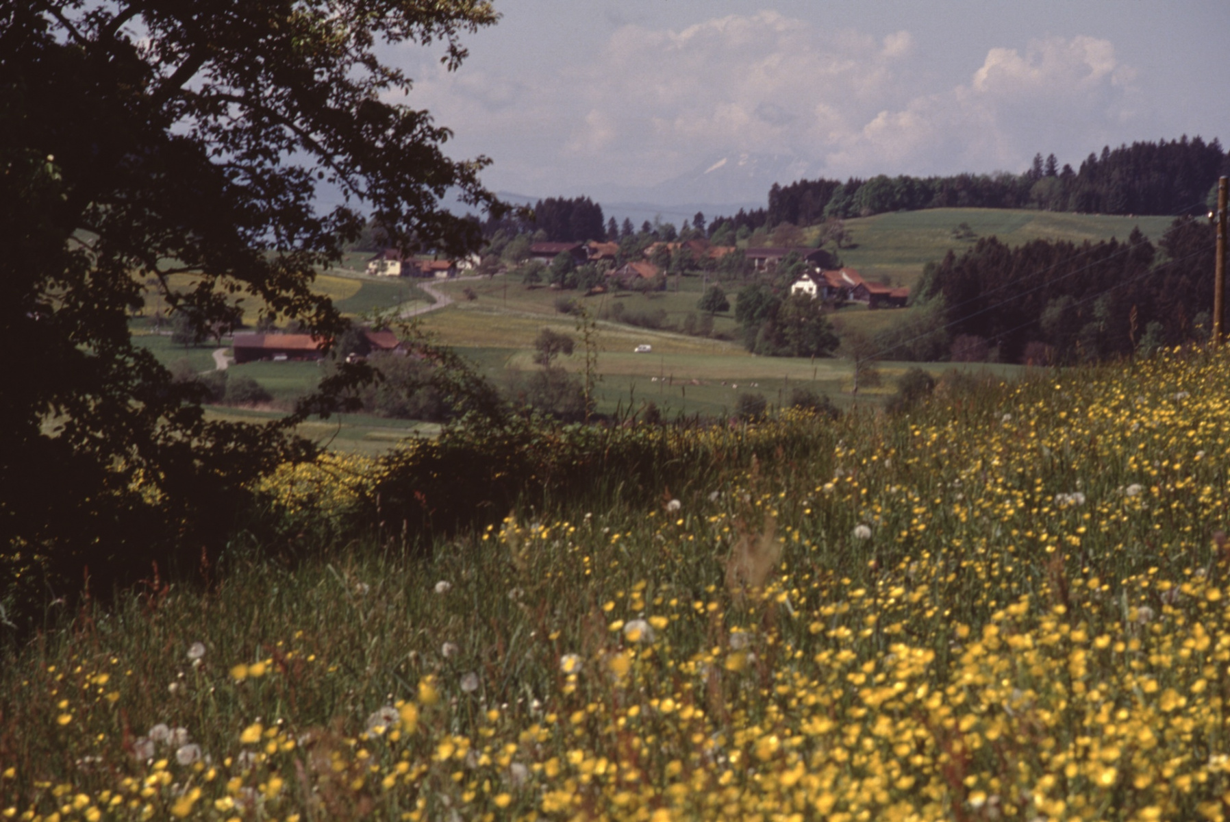 Haldenweglein