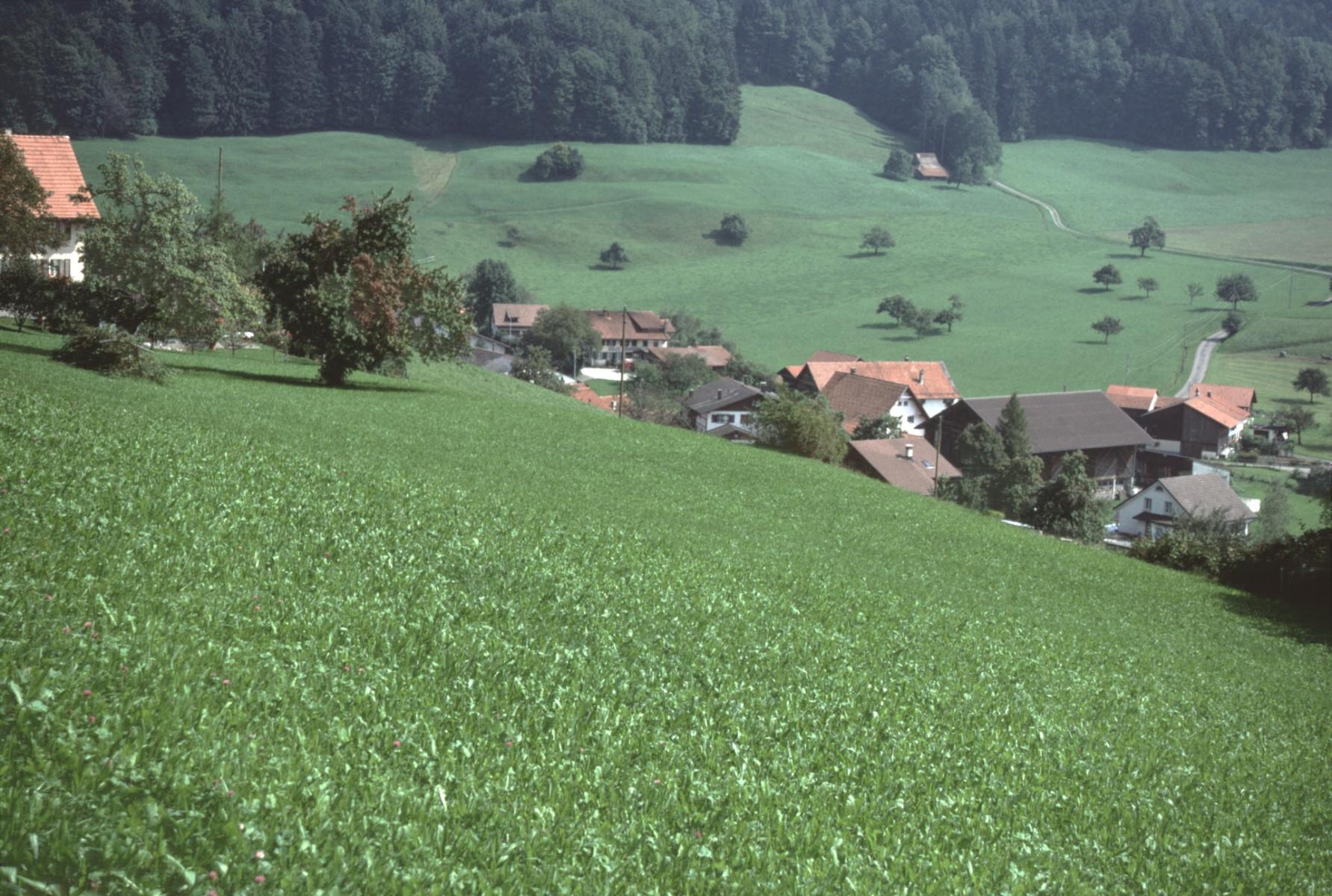 Allenberg. Blick auf Halde bis Obis