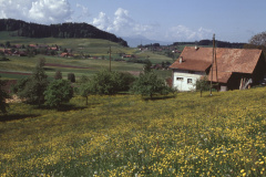 Halde, Blick Ritg. Maiwinkel, Tisenwaldsberg
