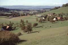Allenberg. Blick Rtg Obere Felg, Fernsicht