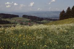 Blick vom Allenberg, Blumenwiese