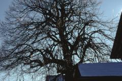 Ghöch 'gefrorener Baum'