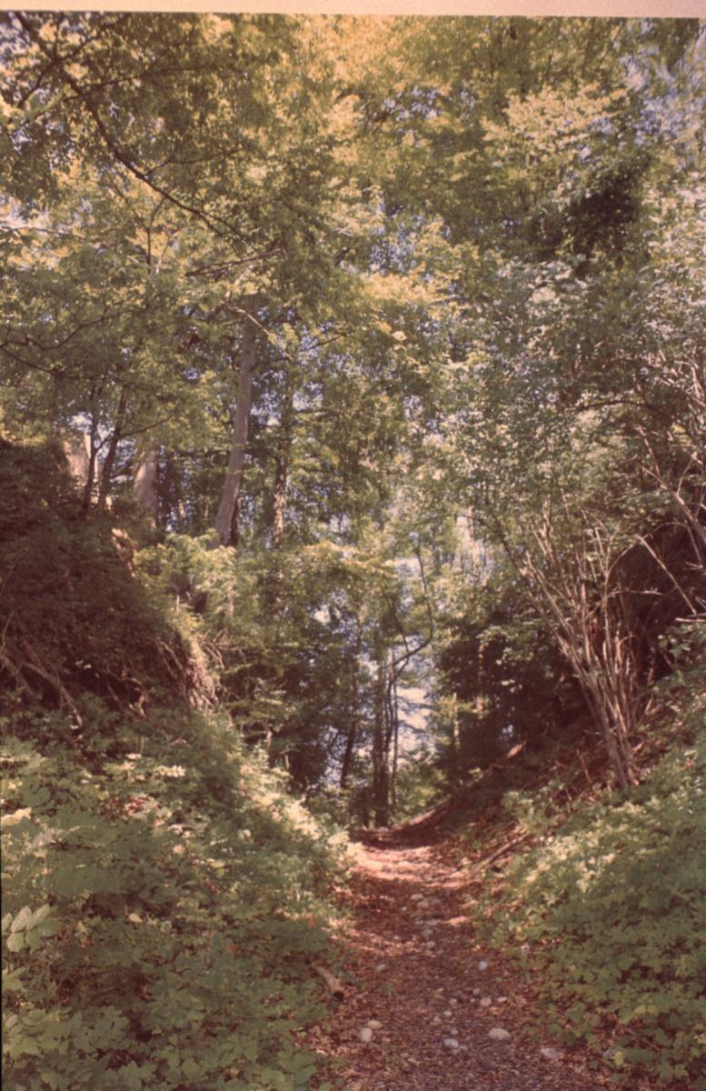 Burghügel Greifenberg