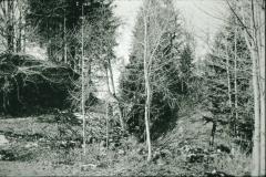 Burghügel Gryffenberg Ostseite