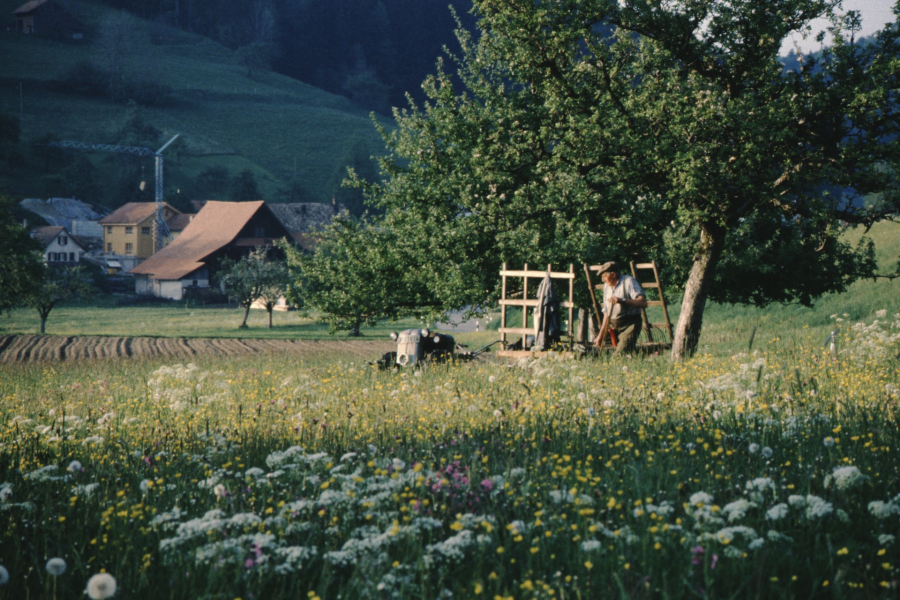 Bei Bettswil, Fritz Walder beim Grasen
