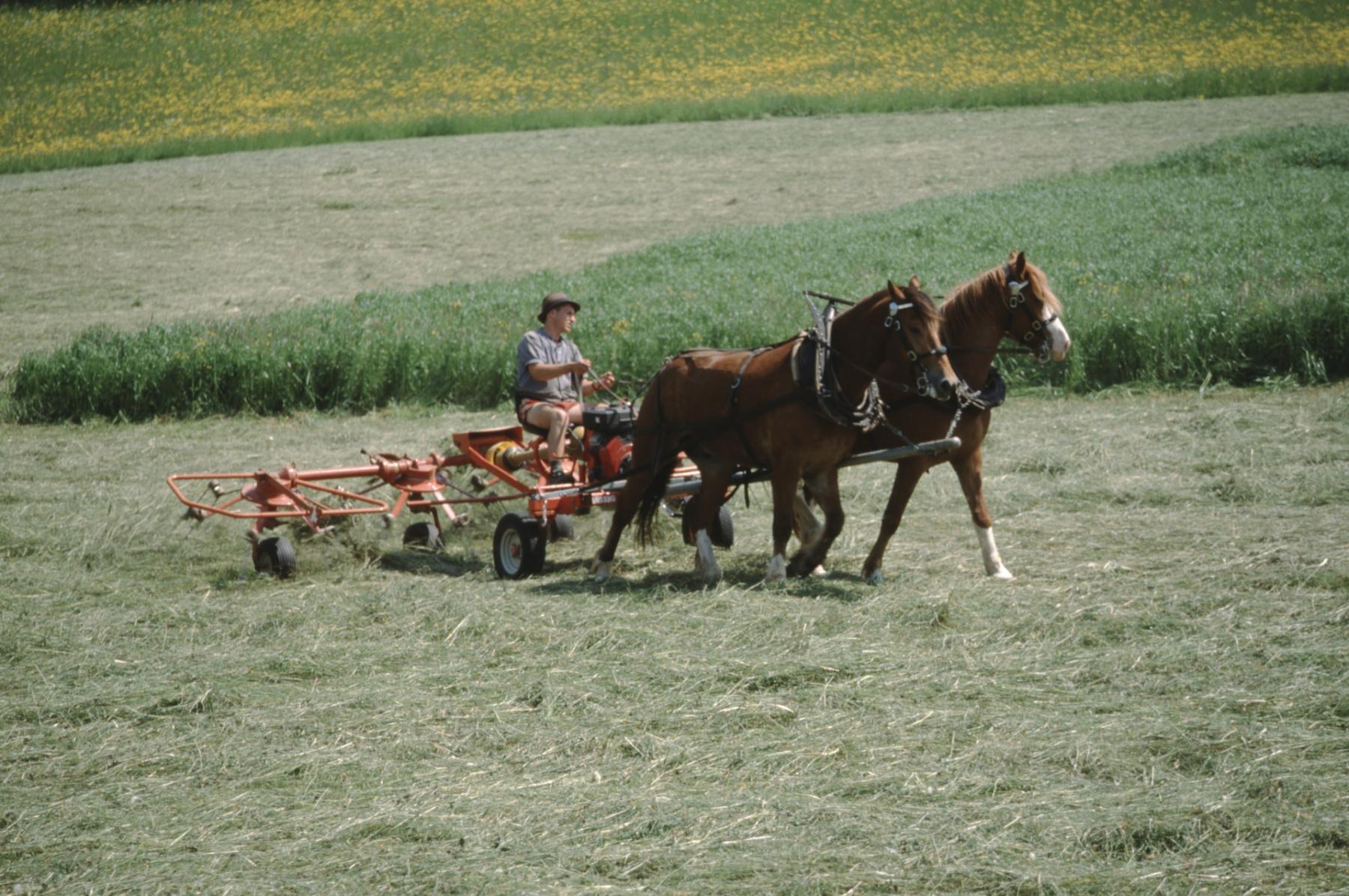 Heuwenden (Motor) gezogen von Pferden, Mühlestr