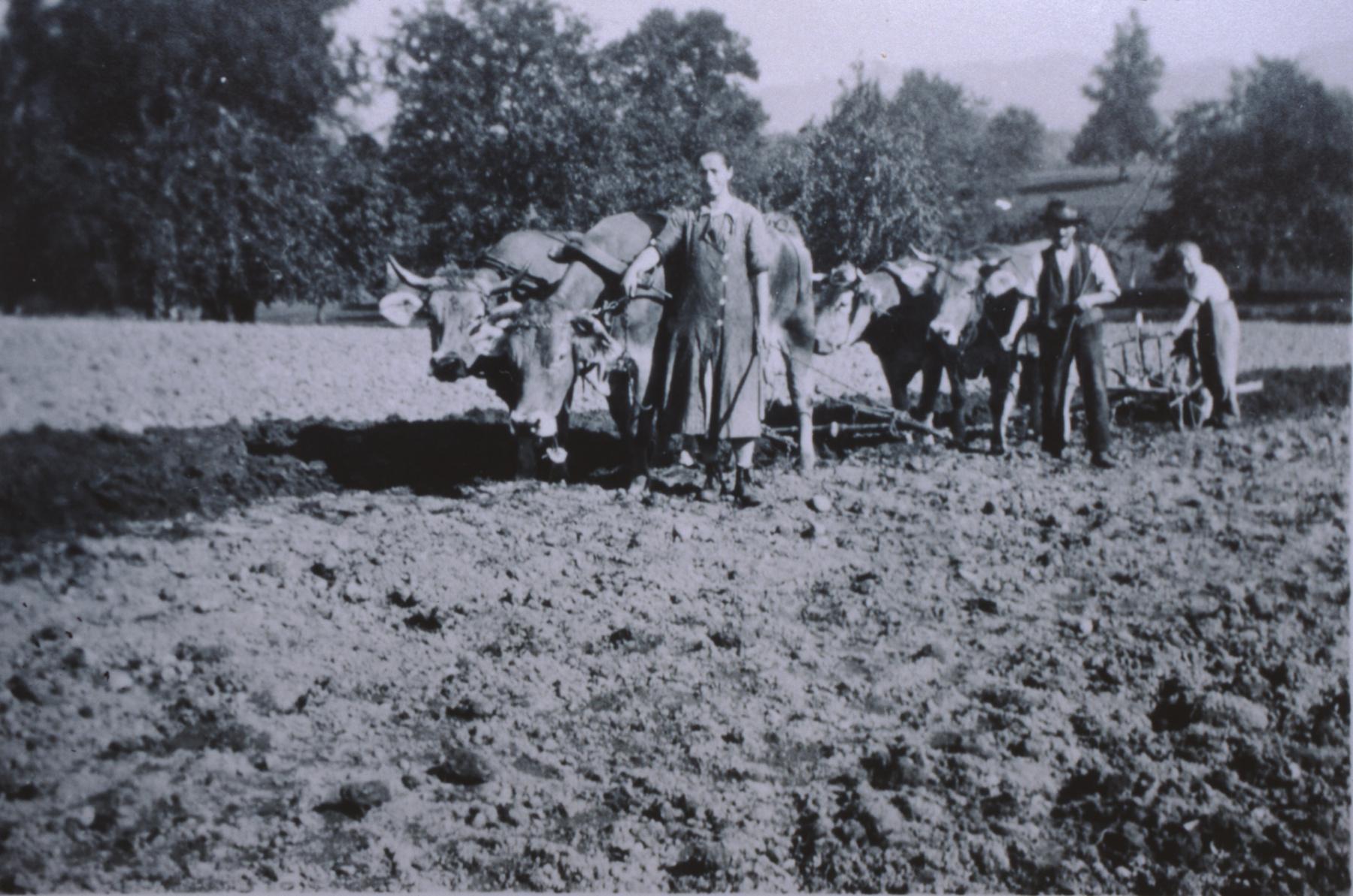 Landwirtschaft anno dazumal, Pflügen