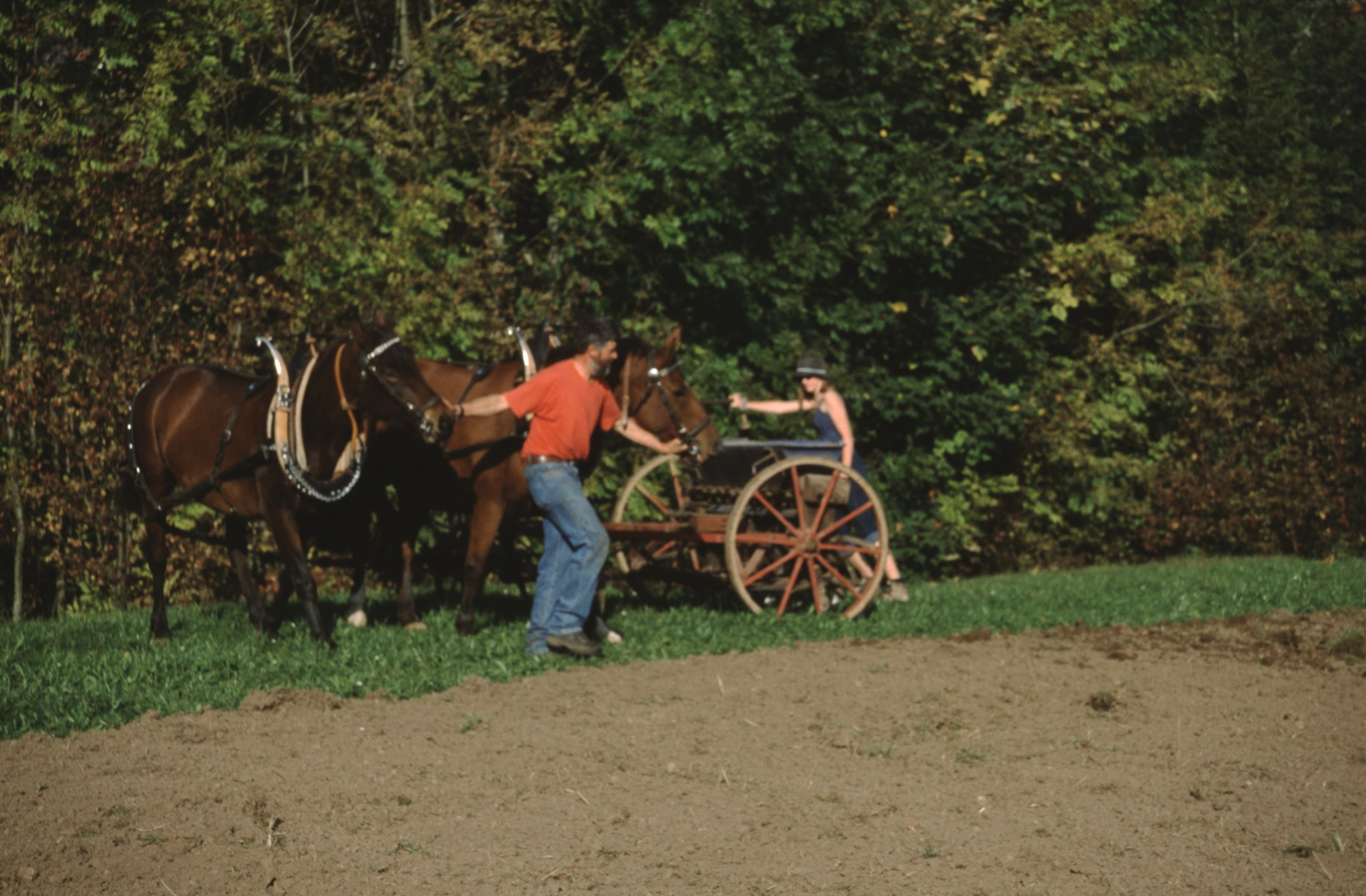 Max Gnehm jun. beim Säen mit Pferd und alter Sämaschine oberhalb Staatskiesgrube