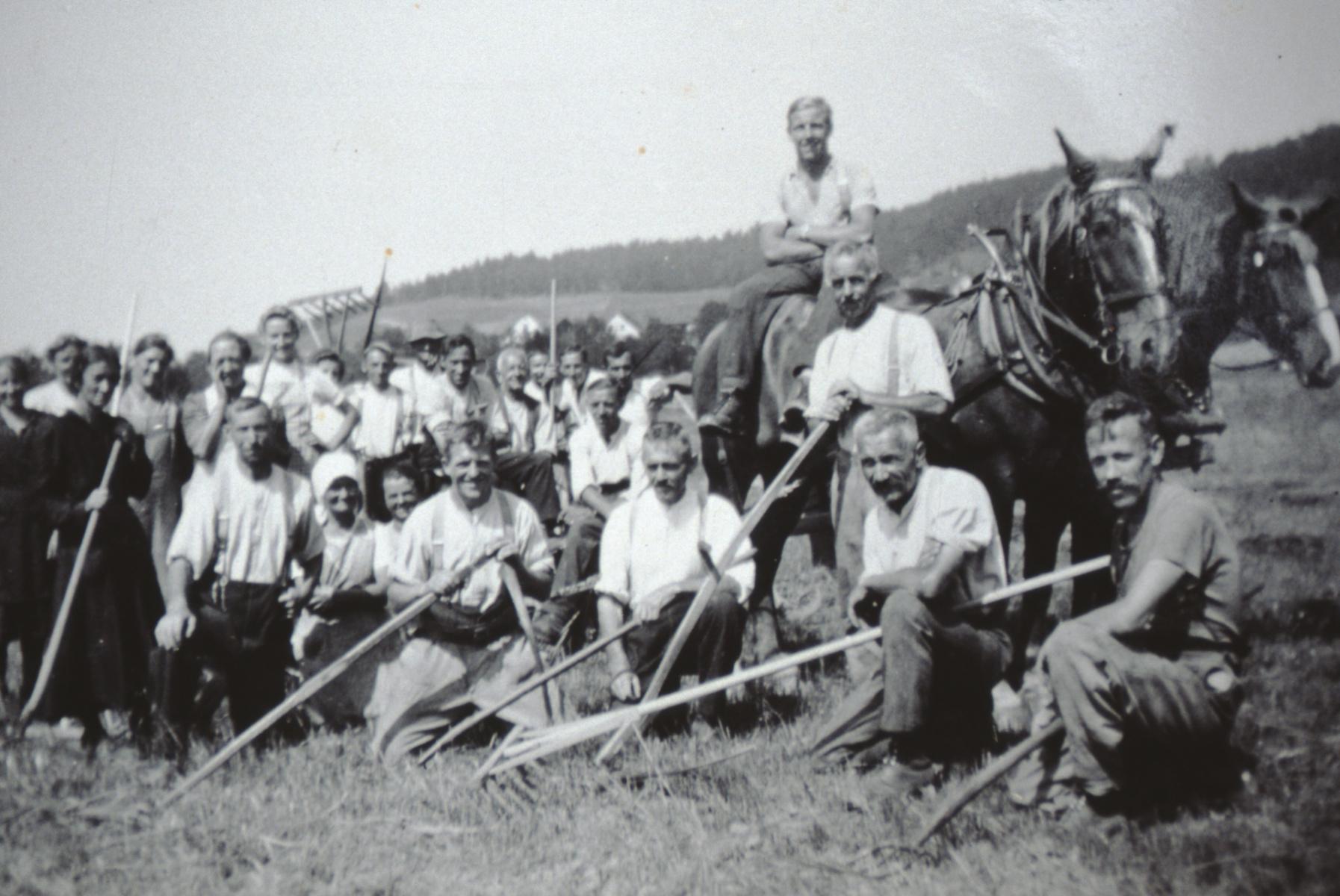 Bettswil. Hafer-Ernte. Auf dem Pferd: Walter Amacher; davor stehend Ernst Fenner. Vorne Mitte mit Sense Ernst Burri, rechts von ihm Paul Walder (alle Bettswil).