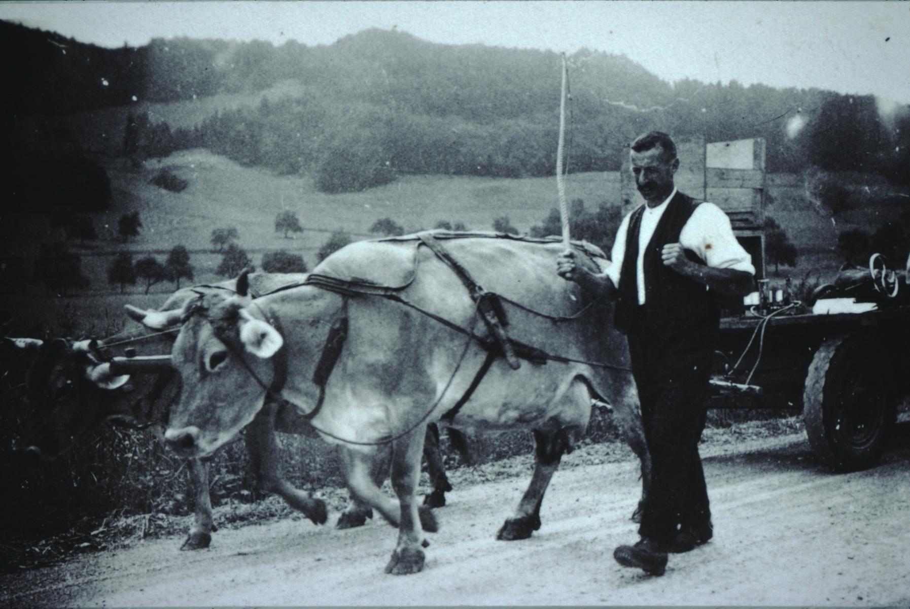 Herr Reiser mit den Kühen anlässlich der Zugsleistungsprüfung für den Landifilm