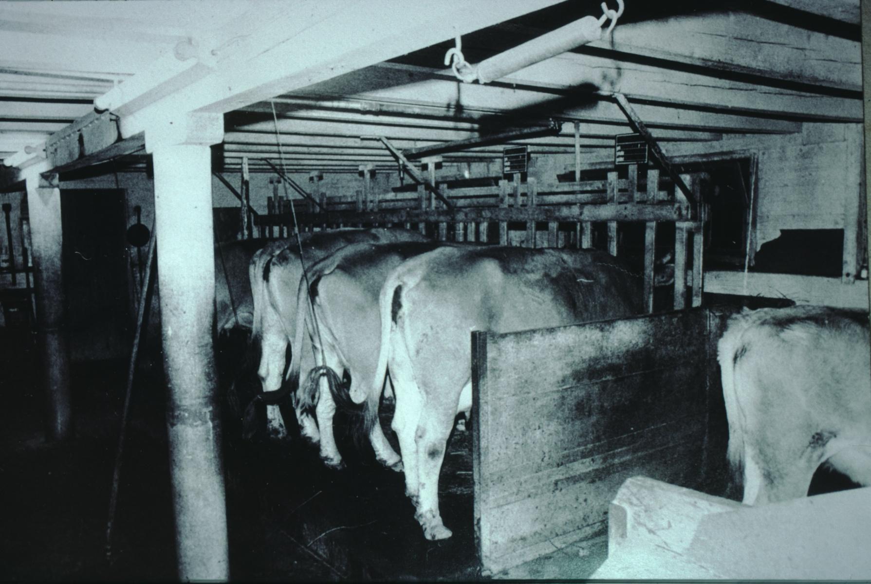 Landwirtschaft, alter Stall, Alfred Dubach, Wappenswil