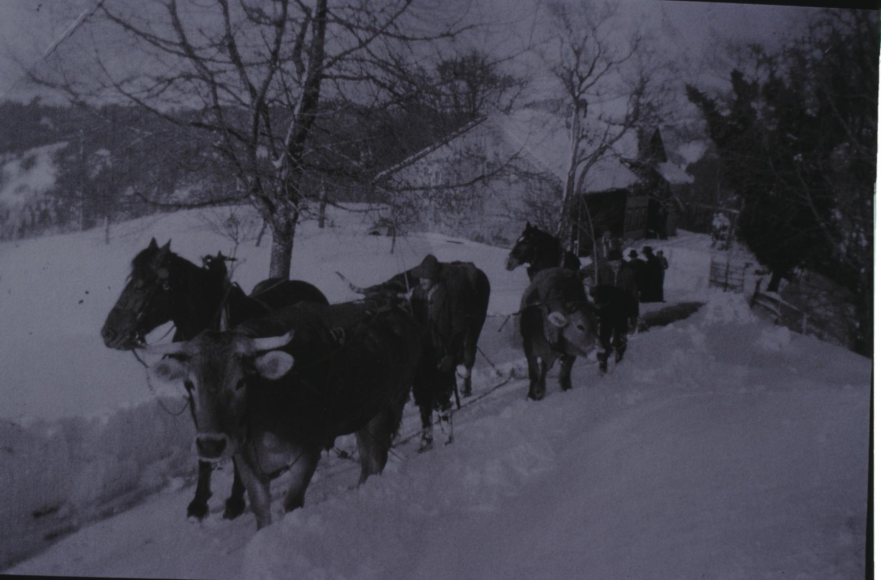 Landwirtschaft, Pfaden mit Pferden und Stieren