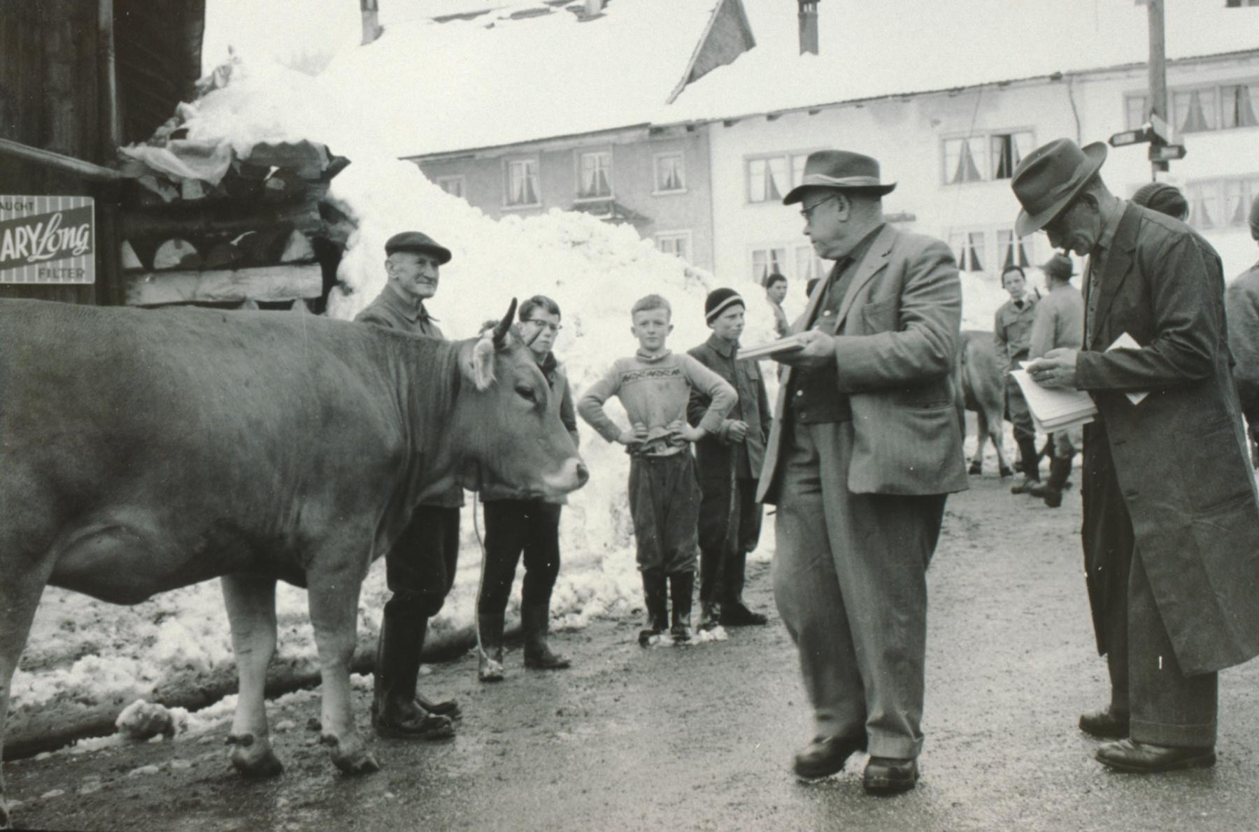 Viehprämierung Berg in Kleinbäretswil, vlnr Köbi Egli (Vogelsang Köbi), Albert Egli jun., Ueli Gentner, Dölf Litschi, NN, Experte, Fredi Litschi, NN, Experte, imHG Flarzhäuser (Chloschter).