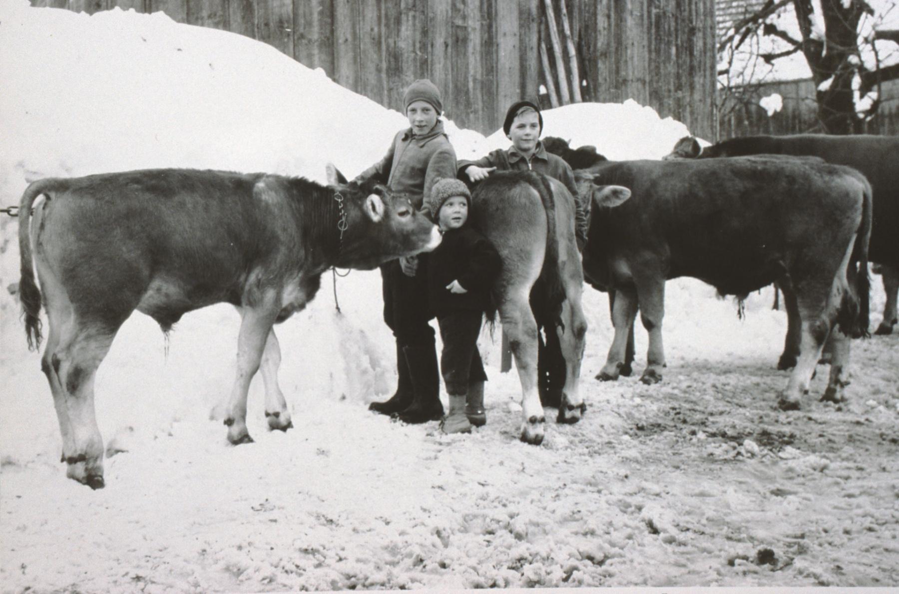 Viehprämierung Berg in Kleinbäretswil, vlnr Köbi Gentner (heute Pneu Gentner Hittnau), Peter Gentner (heute Kaminfegergeschäft), Andreas Egli (Sekelmeisters)