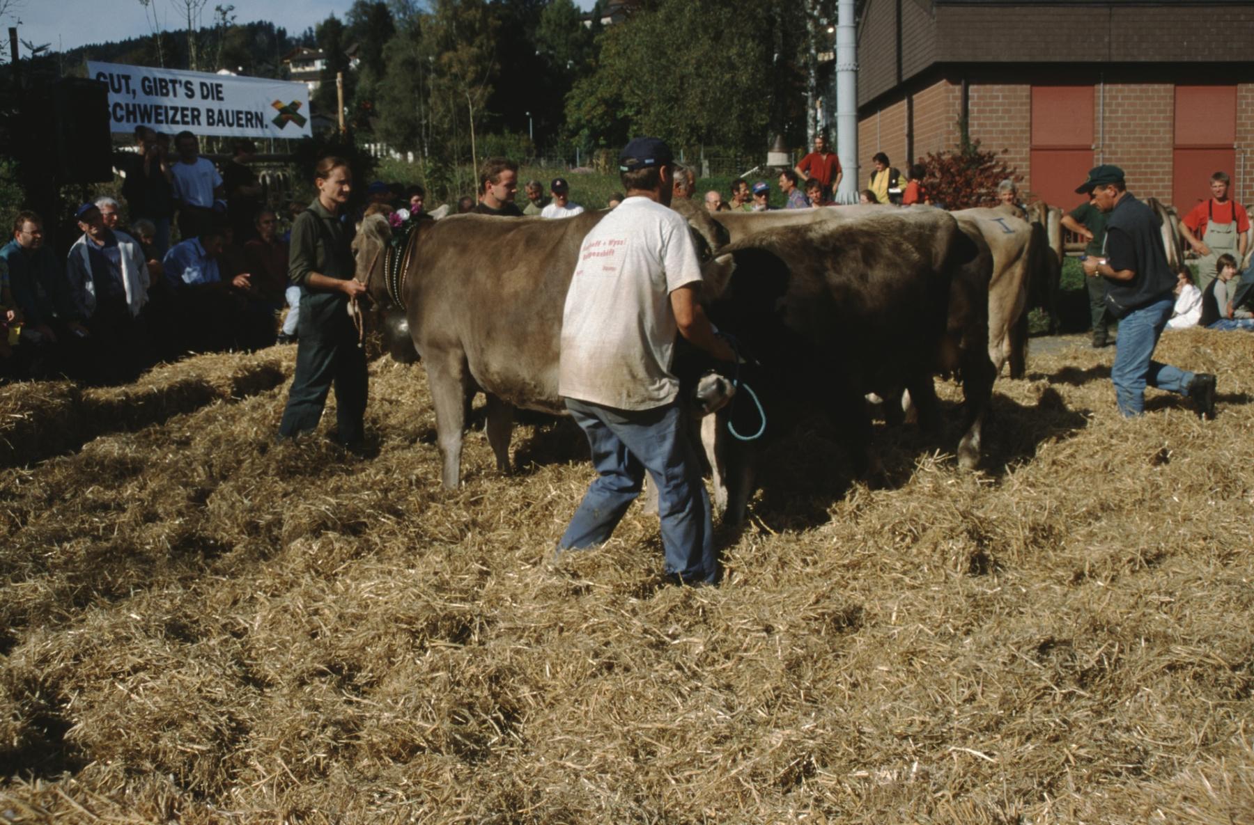 Viehprämierung Spezialprämierungen am Nachmittag