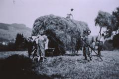 Landwirtschaft, beladen des Heuwagens