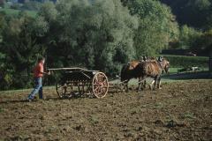 Max Gnehm jun. beim Säen mit Pferdegespann oberhalb Staatskiesgrube