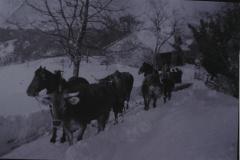 Landwirtschaft, Pfaden mit Pferden und Kühen