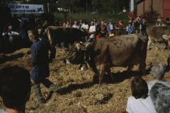 Viehprämierung Vorführungen am Nachmittag