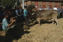 Viehprämierung, Miss Bäretswil auf der Ehrenrunde