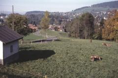 Blick vom Ritterweiher Ritg. Adetswil